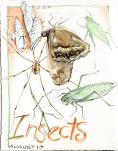 sketching insects!  by Cathy Johnson