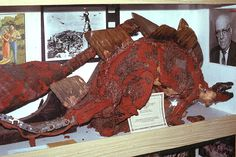 Status of the original O'Brien Armatures? in Kong - Wonder of the World Forum King Kong 1933, King Kong Vs Godzilla, Cool Monsters, Merian, Skull Island, The Dark Crystal, Marvel Films, Stop Motion, Wonders Of The World