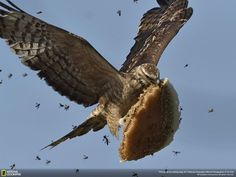 Photos Of The 2017 National Geographic Nature Photographer Of The Year Contest - I Can Has Cheezburger?Winning Photos Of The 2017 National Geographic Nature Photographer Of The Year Contest - I Can Has Cheezburger? Nature Animals, Animals And Pets, Artic Animals, Wildlife Nature, Woodland Animals, Beautiful Birds, Animals Beautiful, Animal Photography, Nature Photography
