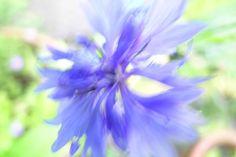 Flowers from my garden - 81