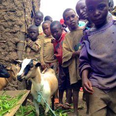Être ambassadrice de Vétérinaires Sans Frontières? Nioki On The Road est un blog Voyage qui parcourt le monde à la recherche de bons plans vacances et découvertes. Sensibles à la coopération et au développement durable, les auteurs de ce blog soutiennent la cause de Vétérinaires Sans Frontières. C'est dans ce contexte qu'Aurélie, en tant qu'ambassadrice de l'association, leur a accordé une interview.