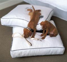Heavenly dog bed: Pamper your pooch! that is awesome Pet Friendly Weddings, Dog Friendly Hotels, Pet Friendly Accommodation, Pet Resort, Resort Spa, Westin Heavenly Bed, Dog Id, Dog Friends, Fur Babies