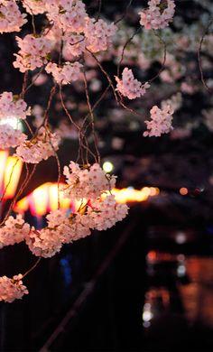 花の色は 移りにけりな 徒に   我が身世に降る 眺めせしまに...今年の卯月は何だか色んなものが芽吹く様な感じやった。5月は何かワクワクがドキドキする〜  / April in  Nakameguro,tokyo