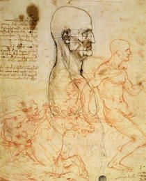 Leonardo Da Vinci   Artflakes
