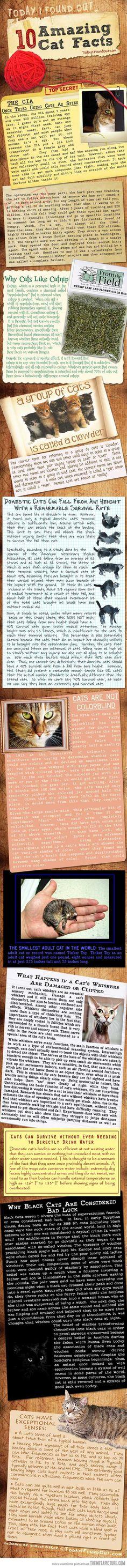 10 Amazing cat facts…
