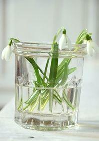 Snowdrops - Galanthus - Bonne Maman Jar