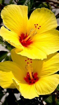 Exotic Flowers, Tropical Flowers, Purple Flowers, Lilies Flowers, Sunflowers, Yellow Roses, Pink Roses, Pansies, Tulips