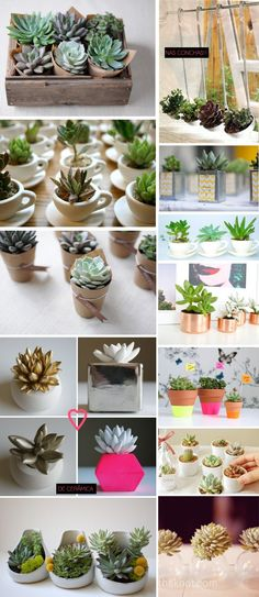 Succulents everywhere, in everything!