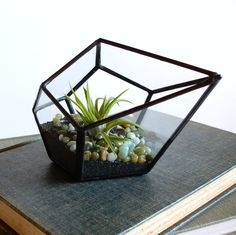 Hey, I found this really awesome Etsy listing at http://www.etsy.com/listing/153275326/terrarium-pod-with-air-plant-geometric