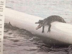 Crocodiles in swimming enclosures. | 37 Pictures That Prove Australia Is The Craziest