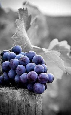 Wine Grapes- decor