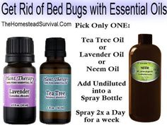 The Homestead Survival | Get Rid of Bed Bugs with Essential Oils | http://thehomesteadsurvival.com