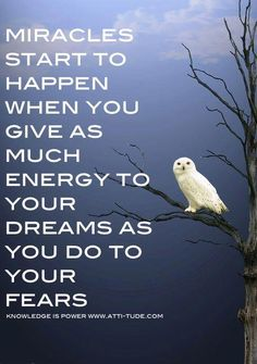 Truth.... miracl, dream big, dream come true, dreams, inspirational quotes, thought, dream quot, snowy owl, owls