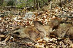 Animales, víctimas de la sequía en Nicaragua - http://verdenoticias.org/index.php/component/content/article/34-noticias/animales/210-animales-victimas-de-la-sequia-en-nicaragua?Itemid=101