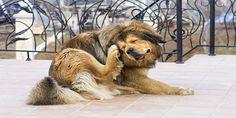http://sobreperrosygatos.com/enfermedades-de-la-piel-en-perros/ Enfermedades de la Piel en Perros