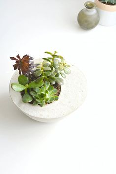 Turn two bowls and some concrete into a beautiful succulent planter. | 33 Gorgeous DIY Projects To Decorate Your Grown Up Apartment