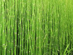 #Silicium Bio à teneur garantie en silicium d'origine naturelle et bio. Présent partout dans notre corps, le silicium est un élément constitutif des tissus conjonctifs. C''est pourquoi Silicium Bio vient en parfait complément de notre produit #Germaflex, riche en manganèse qui contribue à la formation normale des tissus conjonctifs comme les tendons, le cartilage, le derme, etc. L''ortie et la prêle sont des sources naturelles de silicium. #Silicium Bio est particulièrement riche en prêle…