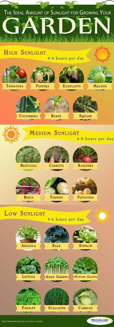 sunlight requirements vegetables