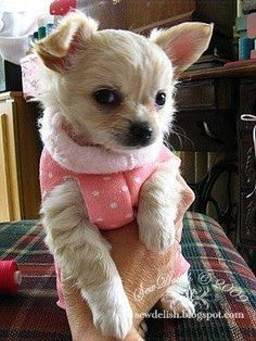 DIY Pets Crafts : DIY Make A Quick No Sew Sweater for a Chihuahua Puppy or Small Dog - Tutorial