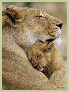 Cuddles for mum.......