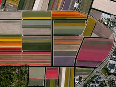 Beautiful, Troubling Photos Show Our Planet as Astronauts See It | Tulip Fields, Lisse, Netherlands   Benjamin Grant/DigitalGlobe  | WIRED.com