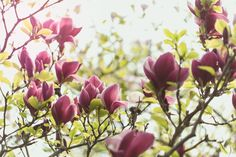 Gardening in April: This is everything you need to do