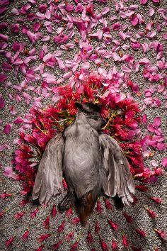 "Nathan Novak, ""The Avian Apotheosis"""