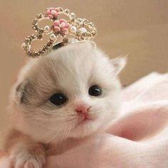 9dc4d5c3167888fb0f2e3a6ca082cb59--cute-cats-adorable-animals - Empress Clawdia - Jokes and Humor
