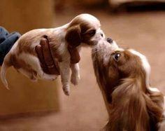 A kiss.