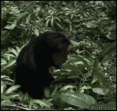 La broma mas cruel del bosque { GIF }
