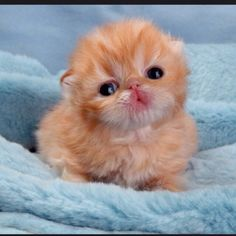 A baby kitten so cute!!!!!