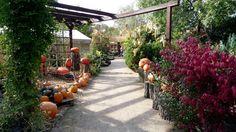 Pumpkin, Patio, Outdoor Decor, Home Decor, Pumpkins, Decoration Home, Room Decor, Squash, Home Interior Design