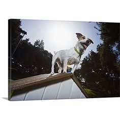"""Yummy Grandmummy, Jack Russell Terrier Dog image Acrylic Fridge Magnet. """"Keep Calm and Love Your Jack Russell"""""""
