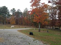 Nov. 2017 Natural Horsemanship, Country Roads, Horses, Nature, Horse, The Great Outdoors, Words, Mother Nature, Scenery