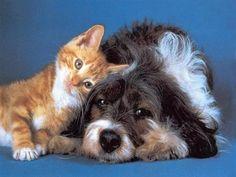 Buddy and calie