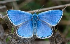 Commons:Featured pictures/Animals/Arthropods/Lepidoptera - Wikimedia Commons
