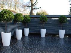 DSC_1297_front-gardens-by-Garden-House-Design-600x600.jpg 800×600 pixels