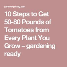 10 Steps to Get 50-80 Pounds of Tomatoes from Every Plant You Grow – gardening ready