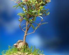 Un árbol Bonsai de interior Muscular por Bonsai4Life en Etsy