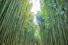 울산 태화강대공원 십리대숲