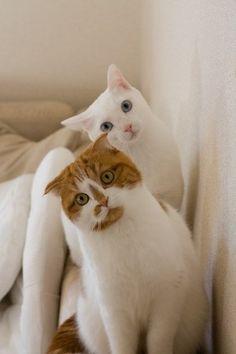cat 猫の手 | Sumally