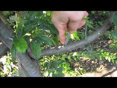 T szemzés  01 Plants, Plant, Planets