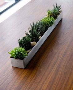 Below are the Indoor Plants Ideas Will Purify Your Rooms Air. This post about Indoor Plants Ideas Will Purify Your Rooms Air was posted under the category by our team at July 2019 at pm. Hope you enjoy . Succulent Gardening, Succulents Garden, Succulent Ideas, Indoor Succulents, Suculentas Interior, Rectangular Planter Box, Big Indoor Plants, Indoor Outdoor, Wooden Box Centerpiece