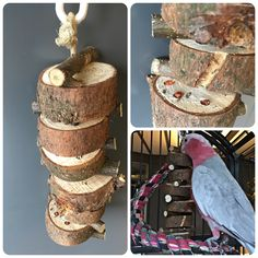 Foraging toy for parrots: pieces of pine wood with holes where you can hide small treats (seeds or dried berries or tiny license of dried fruits).