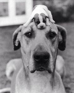 Big dog and a small dog http://ift.tt/2ph5h8O