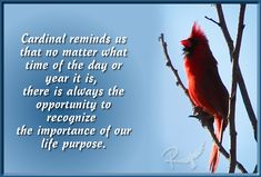 Cardinal reminds us that no matter what time of the day or year it is, there is always the opportunity to recognize the importance of our life purpose.