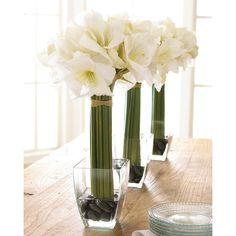 White Amaryllis Floral Arrangement