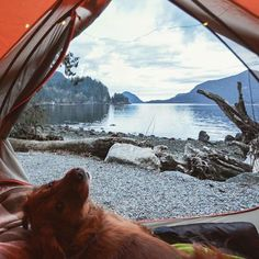 Perfect way to end the day. #campingwithdogs @indiegramz
