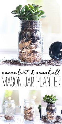 How to make a mason jar planter. Succulents planted in mason jars. Summer planter ideas with seashells. Mason Jar Plants, Mason Jar Succulents, Plants In Jars, Succulents Diy, Mason Jar Diy, Planting Succulents, Kilner Jars, Flowers In Jars, Jar Art