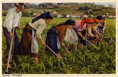 PORTUGAL EM POSTAL Folklore, Poster, Europe, Painting, Weeding, Spirit, Earth, Google, Littoral Zone